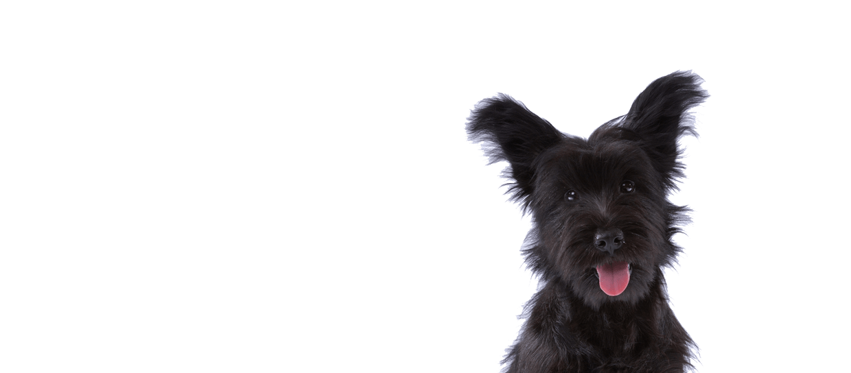 Traslado de Mascotas; Traslado de Perros; Transporte de Mascotas; trasnporte de Perros; Animal Cargo